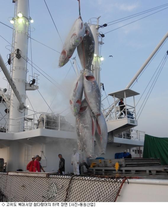 동원산업, 고위도 북대서양 참다랑어 어획 성공