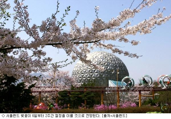 청계산 깨끗한 공기 속 '서울랜드 벚꽃축제' 인기